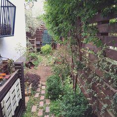 2016.4.28 . 昨日の庭 . フェンス手前の斑入り葉は ジャスミン ミルキーウェイ その奥の太い幹の上でワサってるのはモッコウバラ . うちのは白花一重で 秋にはローズヒップが楽しめます 今はちょびっとしか咲いてないけど蕾はモリモリ. 早く満開の姿が見たい . #gardenlife #gardenlove #green #gardening #garden #flower #vintage #antique #junk #brocante #life #homegarden #ガーデン #庭 #錆び #ガーデニング #サビ #ジャンク #古道具 #暮らし #花のある暮らし #春 #モッコウバラ #賃貸 #ブロカント by fwork_bag