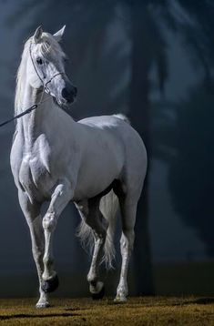 Most Beautiful Horses, Pretty Horses, Horse Love, Animals Beautiful, Connemara Pony, Horse Riding Quotes, Majestic Horse, Horse Drawings, Horse Photos