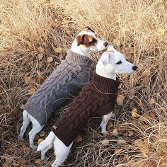 "well-dressed Jack Russell Terriers From your friends at phoenix dog in home dog training""k9katelynn"" see more about Scottsdale dog training at k9katelynn.com! Pinterest with over 20,200 followers! Google plus with over 138,000 views! You tube with over 500 videos and 60,000 views!! Serving the valley for 11 plus years"