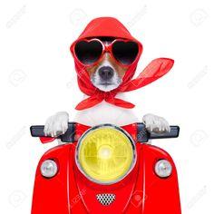 25125614-Motorrad-Hund-Sommer-Hundes-der-eine-Motorrad-mit-Sonnenbrille-Lizenzfreie-Bilder.jpg (1300×1300)
