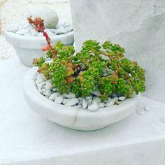 "6 aprecieri, 1 comentarii - TerrariumShop.ro (@terrariumshop.ro) pe Instagram: ""Bună Dimineața! Good morning!  #terrariumshop #terrariu #terrarium #limestone #succulents…"""