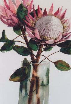 protea watercolour Protea Art, Protea Flower, Watercolor Flowers, Watercolor Paintings, Watercolours, Australian Native Flowers, Australian Wildflowers, Botanical Prints, Painting Inspiration