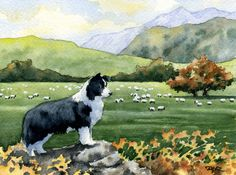 BORDER COLLIE Dog Signed Watercolor Fine Art Print by k9artgallery