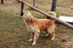 101 mascotas: Como hacer que tu perro pare de ladrar