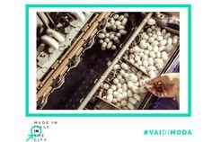 Sapevate la storia di bachi da seta, mai diventati farfalle, che in Piemonte venivano lavorati da mani sagge di uomini e donne? A Caraglio, nel cuneese, ha inizio una storia antica della sericoltura, una storia che parte dal gelso per arrivare ai pregiati fili di seta. La seta è anche Made in Italy.