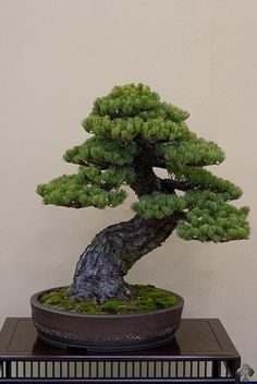 JPB:Bonsai Collection5 | Shows and exhibitions - 2013 - Bonsai Empire