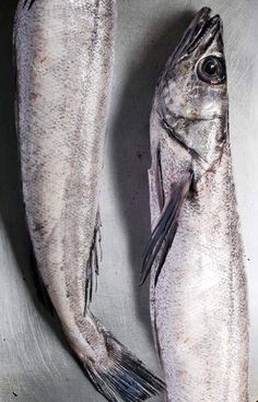 In Season - October. Hake is a really underused Cornish fish. To get the best flavour from hake, salt with course sea salt for an hour before cooking.