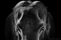 Think Big, Wolf Ademeit. Why is it in portrait photography? Well you get an elephant beautifully lit and photograph it!!!