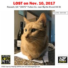 "Lost Cat - Roswell GA - Nov.10 2017 Closest Intersection: Myrtle St and Hill St County: Fulton  #LOSTCAT #Beaker #Roswell (Myrtle St & Hill St)  #GA 30075 #Fulton Co.  #Cat 11-10-2017! Male #Tabby / American Shorthair Mix Orange/Beaker has green eyes and is sweet. He responds to his name ""Beaker"" or treats  CONTACT Phone: (901) 568-4813  More Info Photos and to Contact: http://ift.tt/2iOimTW  To see this pets location on the HelpingLostPets Map: http://ift.tt/2zCDLYj  Let's get Beaker home…"