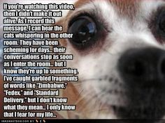 Super Funny Dogs Pics With Captions Kittens Ideas Funny Dog Captions, Funny Animals With Captions, Funny Pictures With Captions, Funny Cats And Dogs, Word Pictures, Picture Captions, Funny Animal Pictures, Pet Pictures, Animal Pics