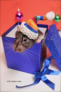 Christmas rat, Pepe