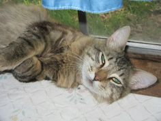 She Drove This Stray Cat To A Shelter. 1 Month Later? I'm SHOCKED! / Anne says Mr. Fancy is home for good. He's earned his place in her family, and her heart.
