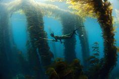 Google Image Result for http://iliketowastemytime.com/sites/default/files/underwater_hunters_free_dive_eyeconic3.jpg More spearfishing ;)