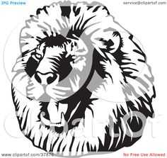 A Black And White Roaring Male Lion Head Tattoo Design