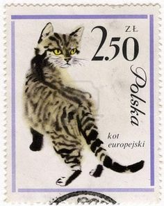 Polski kot