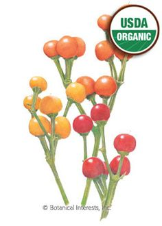 """Annual. 85 days from transplanting. These """"cute as a bug"""", 1"""" mini peppers grow upright and include Red Fire, Yellow Lemon, and Orange Globe. Easy to grow in the garden — just like other peppers. When mature, strip away foliage and use them to add excitement to cut flower arrangements. Plant them in your flower garden, instead of hiding them in the back yard with your vegetables. They look especially attractive paired with blue or purple flowers."""