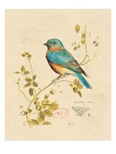 Art Print: Gilded Songbird Art Print by Chad Barrett by Chad Barrett : 24x18in