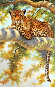 Wildlife Paintings, Wildlife Art, Animal Paintings, Animal Drawings, Wild Animals Pictures, Tiger Pictures, Animal Pictures, Big Cats Art, Cat Art