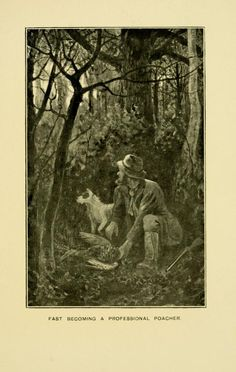 The snaffle papers / - Biodiversity Heritage Library