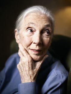 """Jane Goodall beobachtete jahrelang wilde Schimpansen. Sie entdeckte, dass die Tiere morden und Krieg führen. Als Ökoaktivistin hat die Britin inzwischen mehr mit Menschen zu tun – und glaubt immer noch an das Gute in uns. Premium-Content aus: """"Der Spiegel"""""""