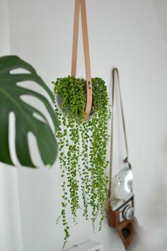 look! pimp your room: Urban Jungle Bloggers: Plants & Glass