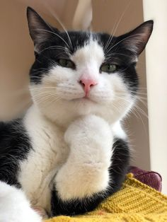 Animals Discover Cute Cats And Kittens Kittens Cutest I Love Cats Crazy Cats Kitty Cats Pet Cats Weird Cats Lady Kitty Ragdoll Cats Funny Animal Memes, Funny Animal Pictures, Cat Memes, Funny Cats, Funny Animals, Cute Animals, Squirrel Memes, Funny Memes, Images Of Cute Cats