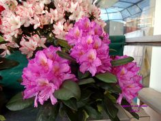 Floral Wreath, Wreaths, Plants, Home Decor, Flower Crowns, Door Wreaths, Flora, Deco Mesh Wreaths, Interior Design