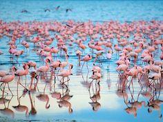 Lake Naivasha, Kenya - Home to 54 countries, Africa has something for everyone.
