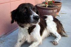 Maggie es una madraza que ha llegado al centro junto a sus dos adorables cachorros.