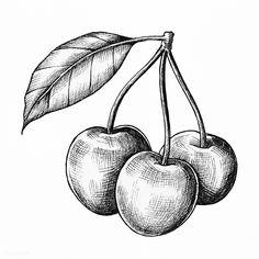 premium illustration of Three hand drawn fresh cherries premium illustration of Three hand drawn fresh cherries 1200188 Pencil Art Drawings, Cool Art Drawings, Art Drawings Sketches, Tattoo Drawings, Cherry Drawing, Fruit Sketch, Shell Drawing, Art Kawaii, Fruits Drawing