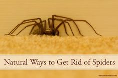 Get Rid of Spiders Naturally - eucalyptus leaves, sprinkle Borax around, use citrus sprays, spray certain essential oils mixed with water, seal cracks, reduce clutter