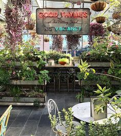 Good Thymes in the shed 🌻🌿 @thegrounds #thegrounds #thepottingshed