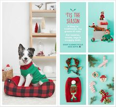 PetSmart Holiday Book 2018 Ads and Deals Browse the PetSmart Holiday Book 2018 ad scan and the complete product by product sales listing. Books 2018, Coupons, Kids Rugs, Ads, Holiday, Vacations, Coupon, Kid Friendly Rugs, Holidays