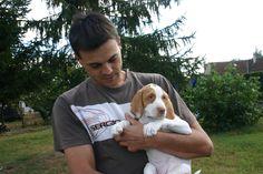 BSG puppy