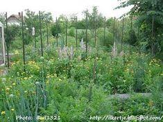 Konyhakert természetesen: A növénytársításról Herb Garden, Vineyard, Herbs, Vegetables, Plants, Outdoor, Gardening, Blog, Outdoors