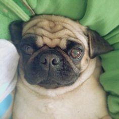 Comfy Lola
