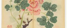 Colours of: The world's oldest colour printed book - The Chromologist