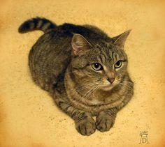 Albrecht Durer (1471-1528), il gatto