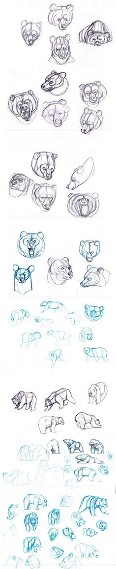 Bears sketches by sofmer.deviantart.com on @deviantART
