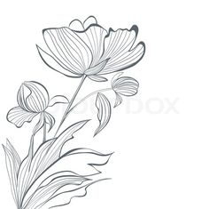 Vector of 'Stylized Peony flowers'