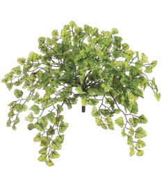 URN The Maidenhair Fern Bush adds a natural touch to your home or office decor. This faux fern foliage makes an excellent accent piece for daily use as well as during festive and celebratory occasions. Green Landscape, Landscape Design, Tree Photoshop, Photoshop Render, Maidenhair Fern, Tree Silhouette, Plantation, Photoshop Elements, Faux Flowers