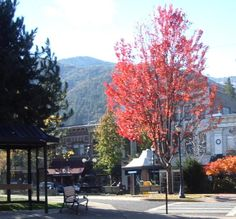 Ashland, OR : Plaza in downtown Ashland Ashland Oregon, Heart Place, Small Town America, House Prices, Small Towns, Home Values, Road Trip, Real Estate, City