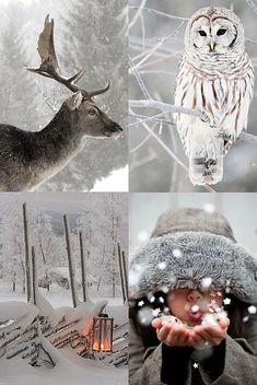 Paesaggi invernali e innevati.