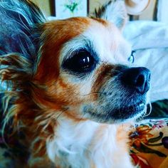 おはよう、日曜日! Good Morning sunday! . . . . 朝日を見る犬。 . . . この眼差しが好き。 . . . . おはよう、日曜日。 おはよう、サリー。 今日も、よろしく。 . . . . . . . . . #おはよう#日曜日#早朝#朝日#朝#愛犬#犬#写真#暮らし#私のファインダー越しの世界#表情 #好き #goodmorning #goodnight #thegoodlife #goodlife #sunshine#love#life #lifeisbeautiful #dog #dogstagram #photography #photo#photooftheday #happy#멍스타그램#개스타그램#chihuahua