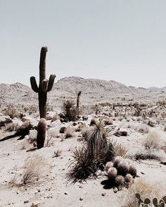 joshua tree, california - Earmark Social Bridgette S. joshua tree, california Travel Guide to Joshua Tree, California Desert Dream, Desert Life, Desert Days, In The Desert, Memorial Day, To Infinity And Beyond, Palm Springs, Land Scape, The Great Outdoors