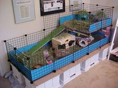 future toby home?