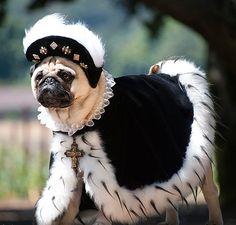 pugs in costume: Crazy Pugs English Bulldog Puppies, Pug Puppies, English Bulldogs, French Bulldogs, Baby Bulldogs, Terrier Puppies, Boston Terrier, Pugs In Costume, Pet Costumes