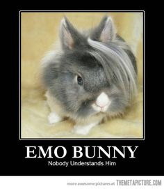 "^.\\^ maybe some ""my little bunny"" hair beads and barrettes will cheer up emo bunny?"