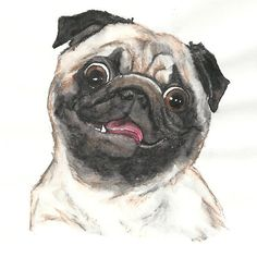 Puggy Person