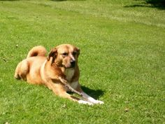 Create a Dog Friendly Yard - If you are going to keep a dog then learn how to create a Dog Friendly Yard so that your dog is safe to roam around your yard without fear of harm....